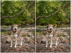 Before & After: No Need to Go Off-Leash