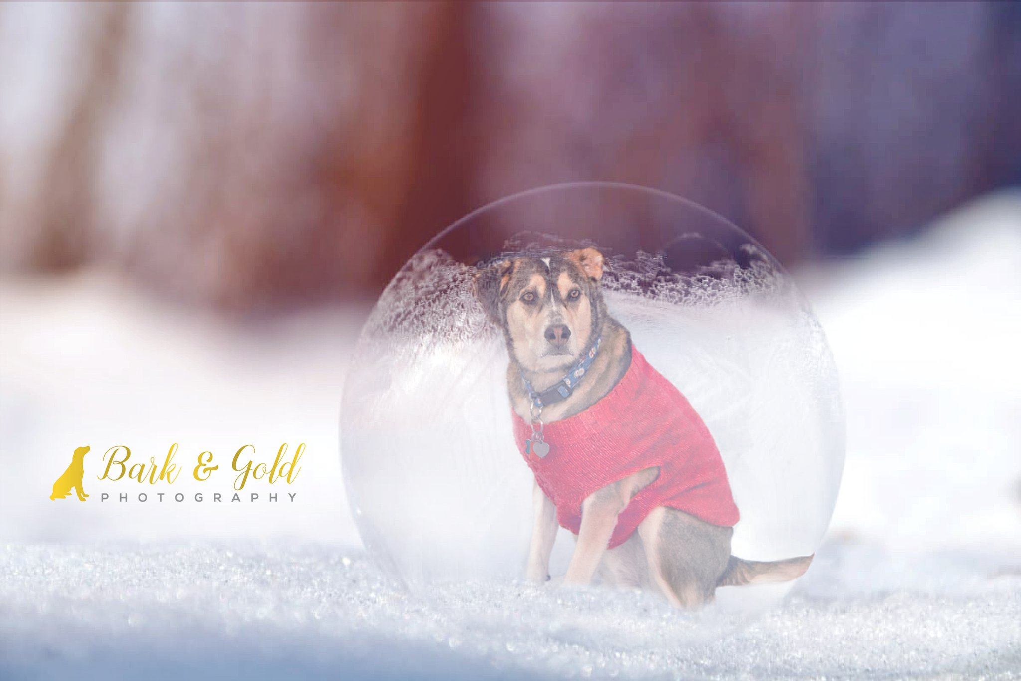 Siberian retriever in ice bubble for personal photography project