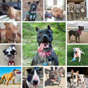 Pittsburgh Pet Parents Raise Over $6,100 for Biggies Bullies via Calendar Contest