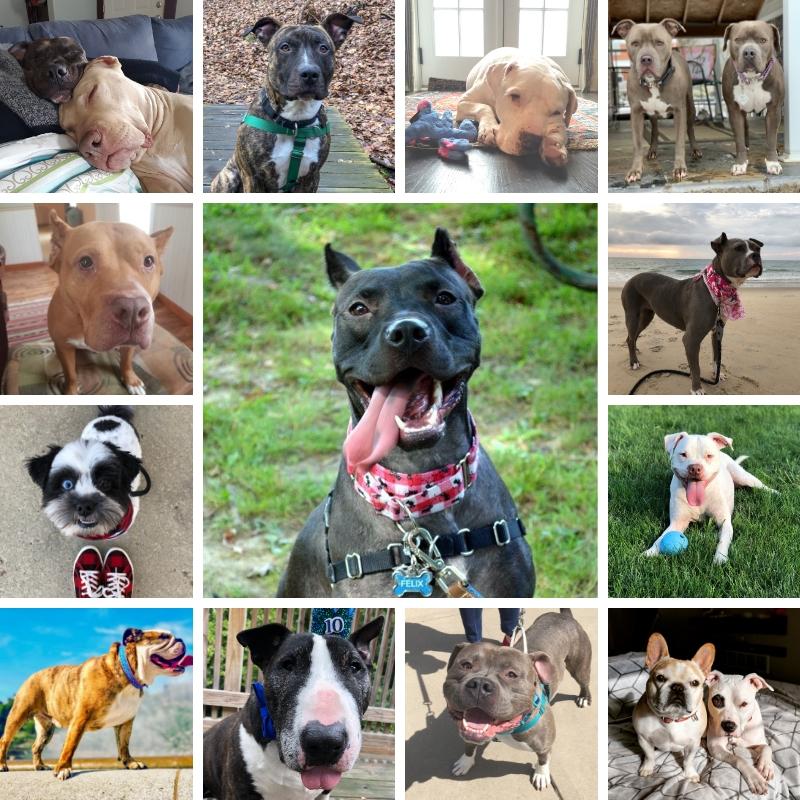 2020 Biggies Bullies pet calendar contest winners