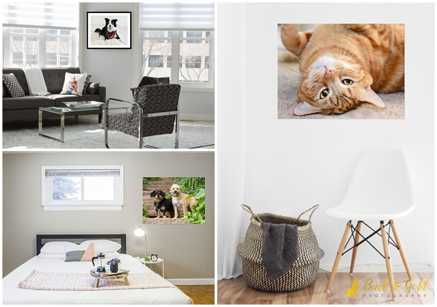 small walls with large pet portraits