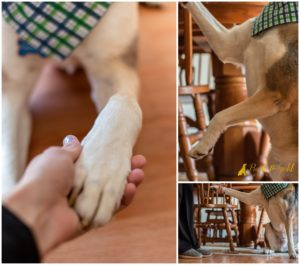 Teach Your Dog to High Five