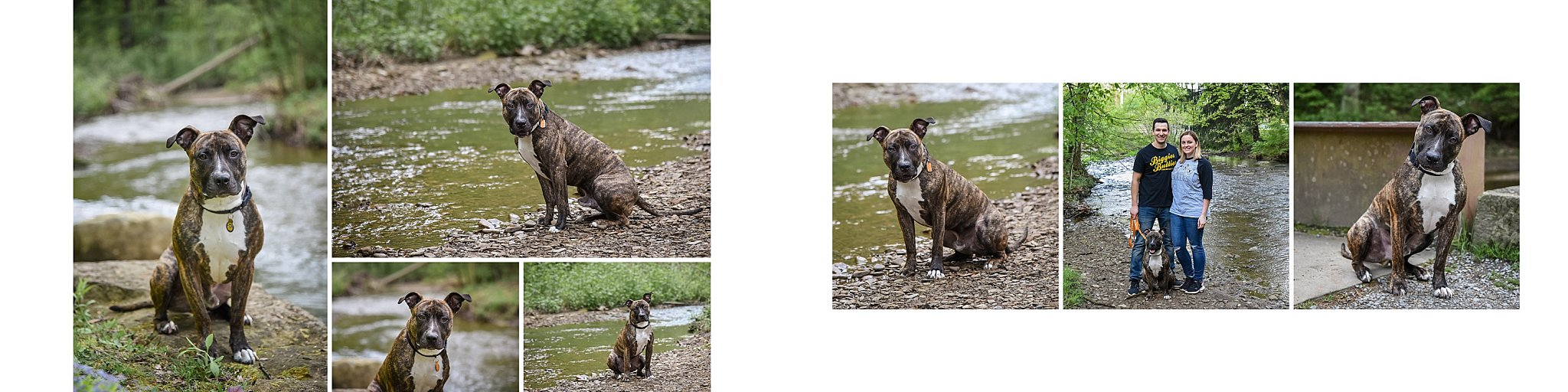 fine art album spread of a pit bull with family at Brady's Run Park