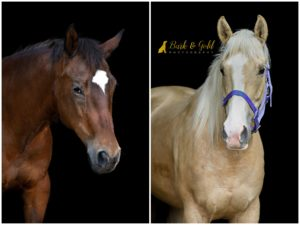 Creating a Black Background Horse Portrait with Barn Doors - Pittsburgh Equine Photography