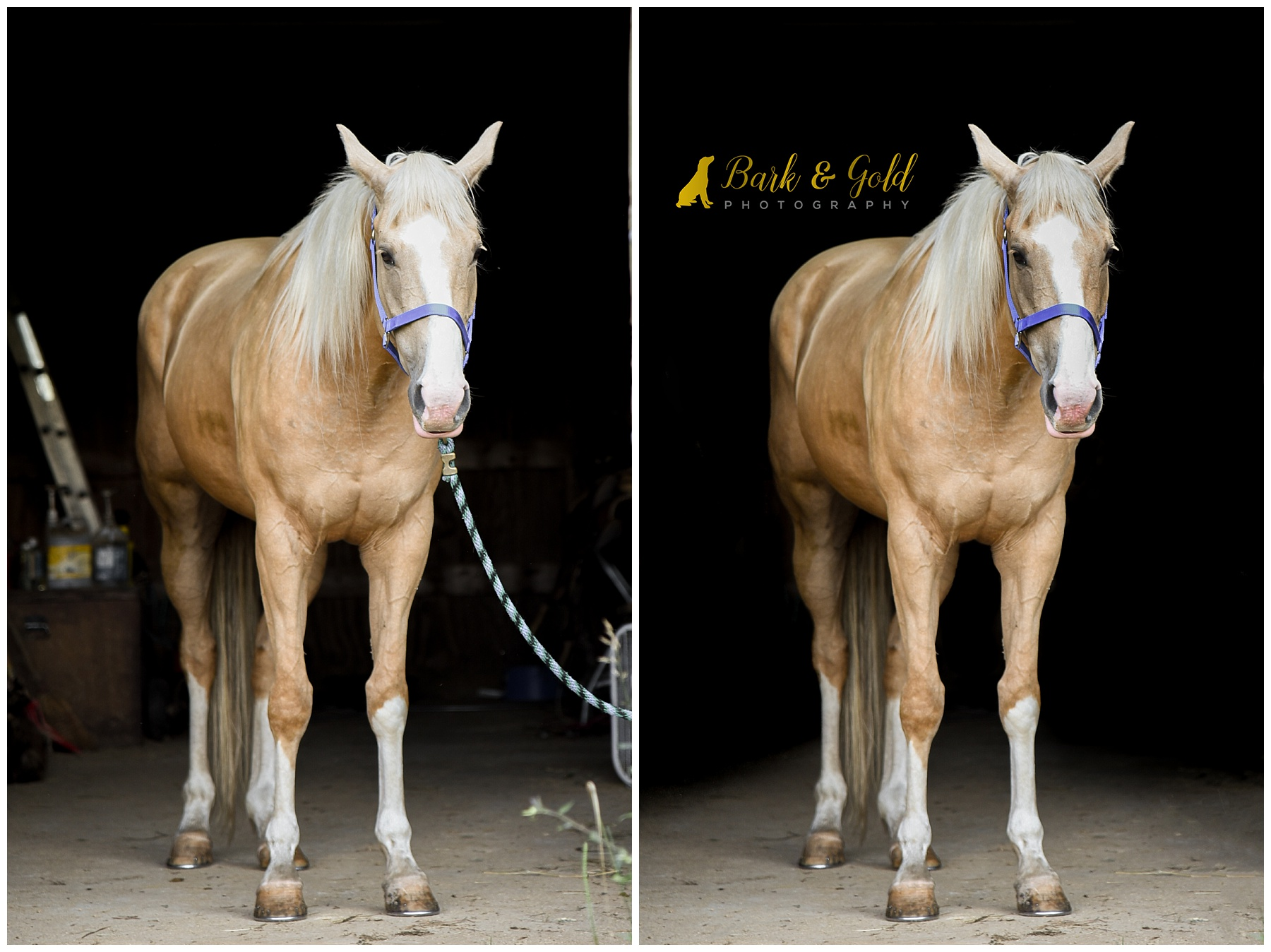 positioning of horse in barn doors to capture black background portraits