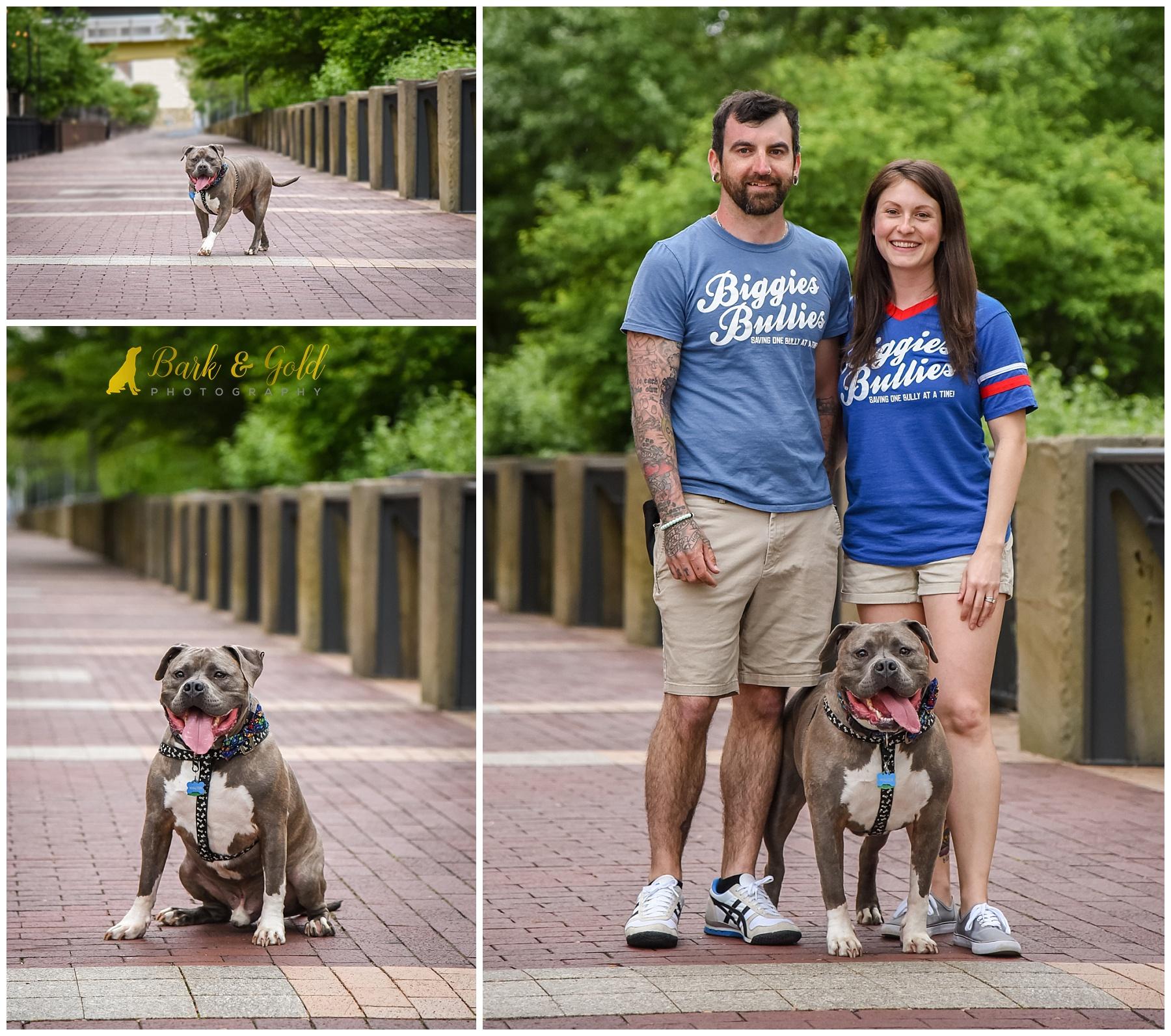 Biggies Bullies pit bull parents on the city's North Shore