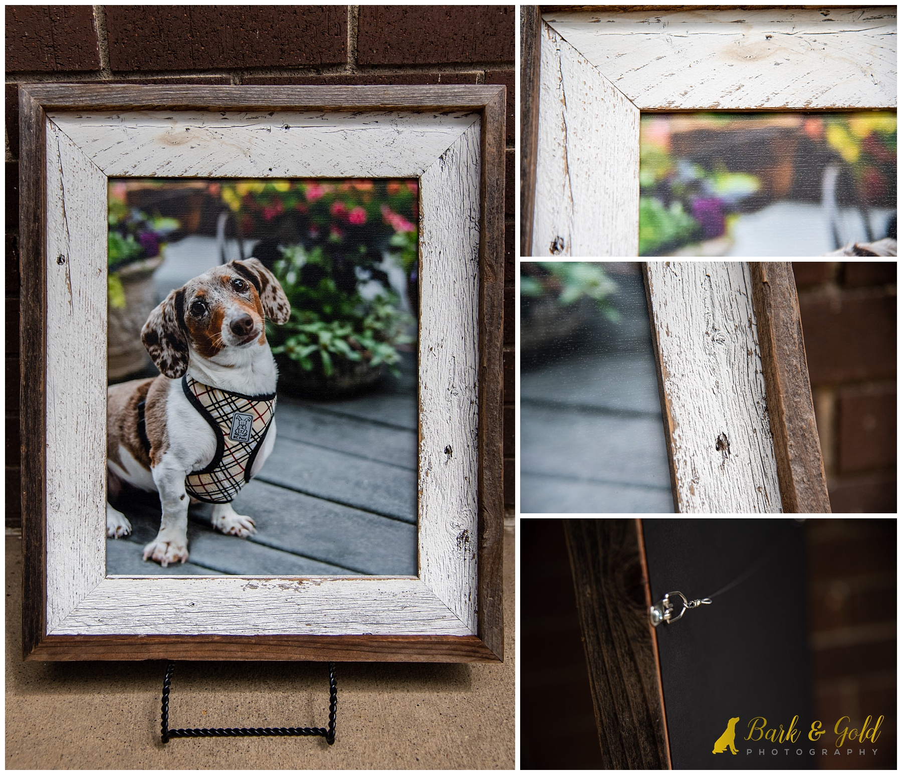 detailing on portrait of dachshund puppy in barnwood frame