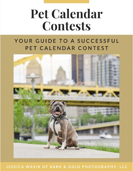 Pet Calendar Contest PDF Guide with pit bull on cover