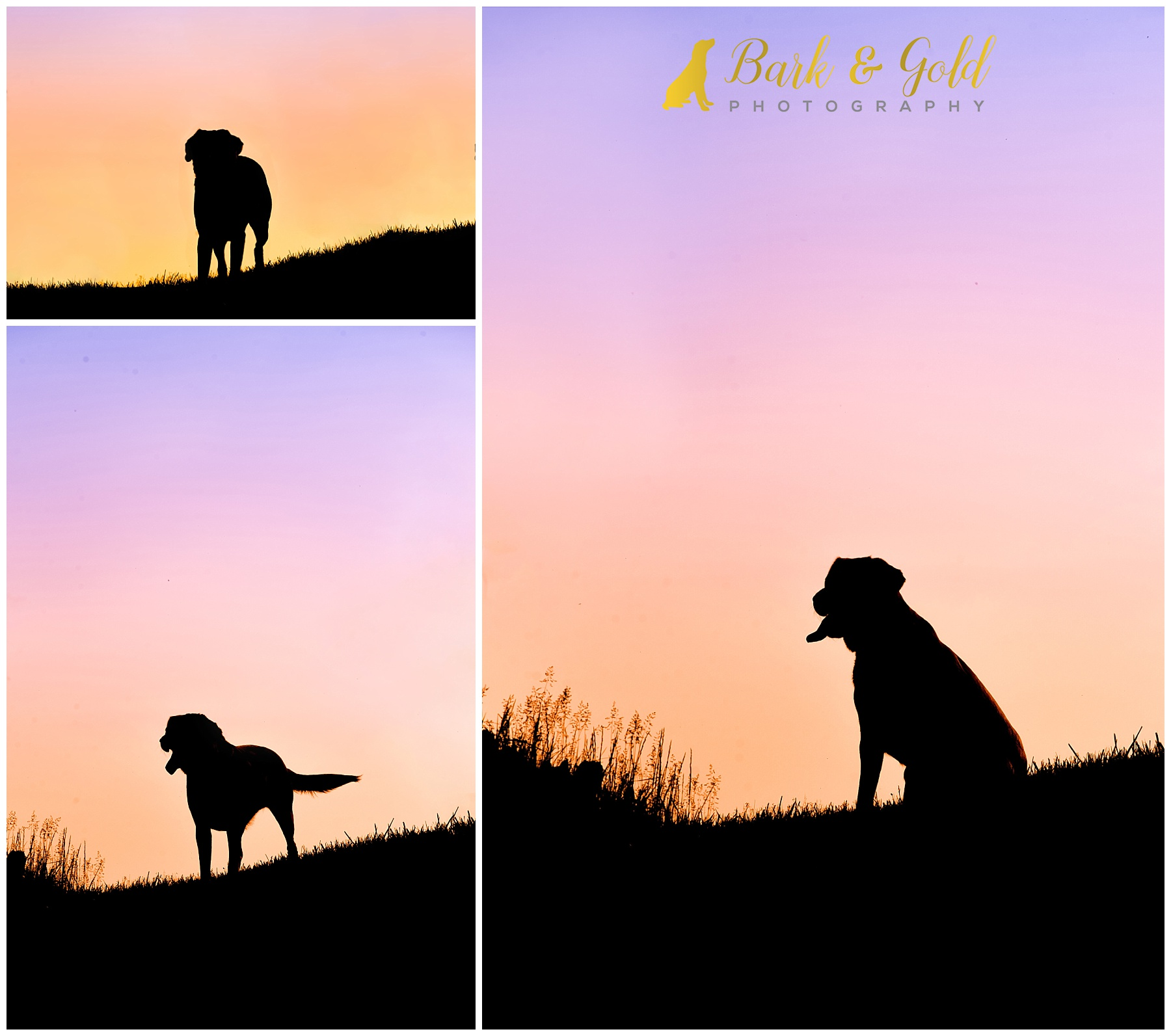 English Lab against a pink sky during a Silhouette Sunset Session at Mingo Creek Park