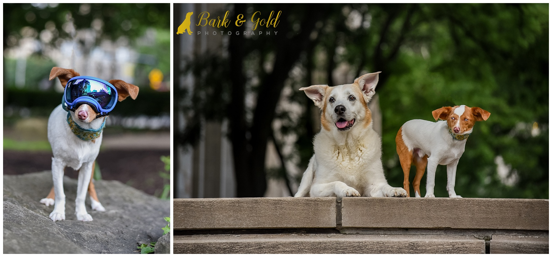 two dogs posed on the steps near Heinz Chapel in downtown Pittsburgh during a pet photography workshop
