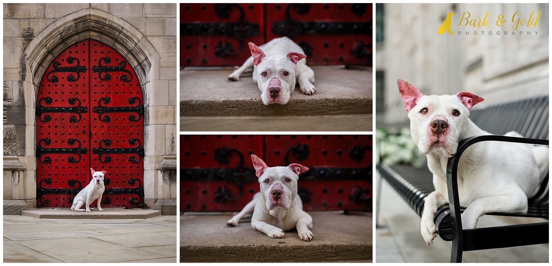white pit bull by bright red door at Pittsburgh's Heinz Chapel