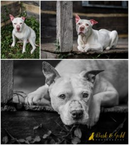 A Peek at a Pittsburgh Pet Photography Workshop