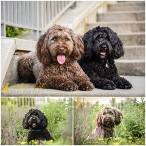 Winnie, Cliff, and Family at Schenley Park - Downtown Pittsburgh Pet Photography