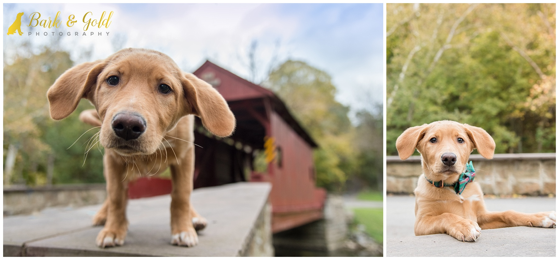Brown puppy at Mingo Creek Park exploring the covered bridge