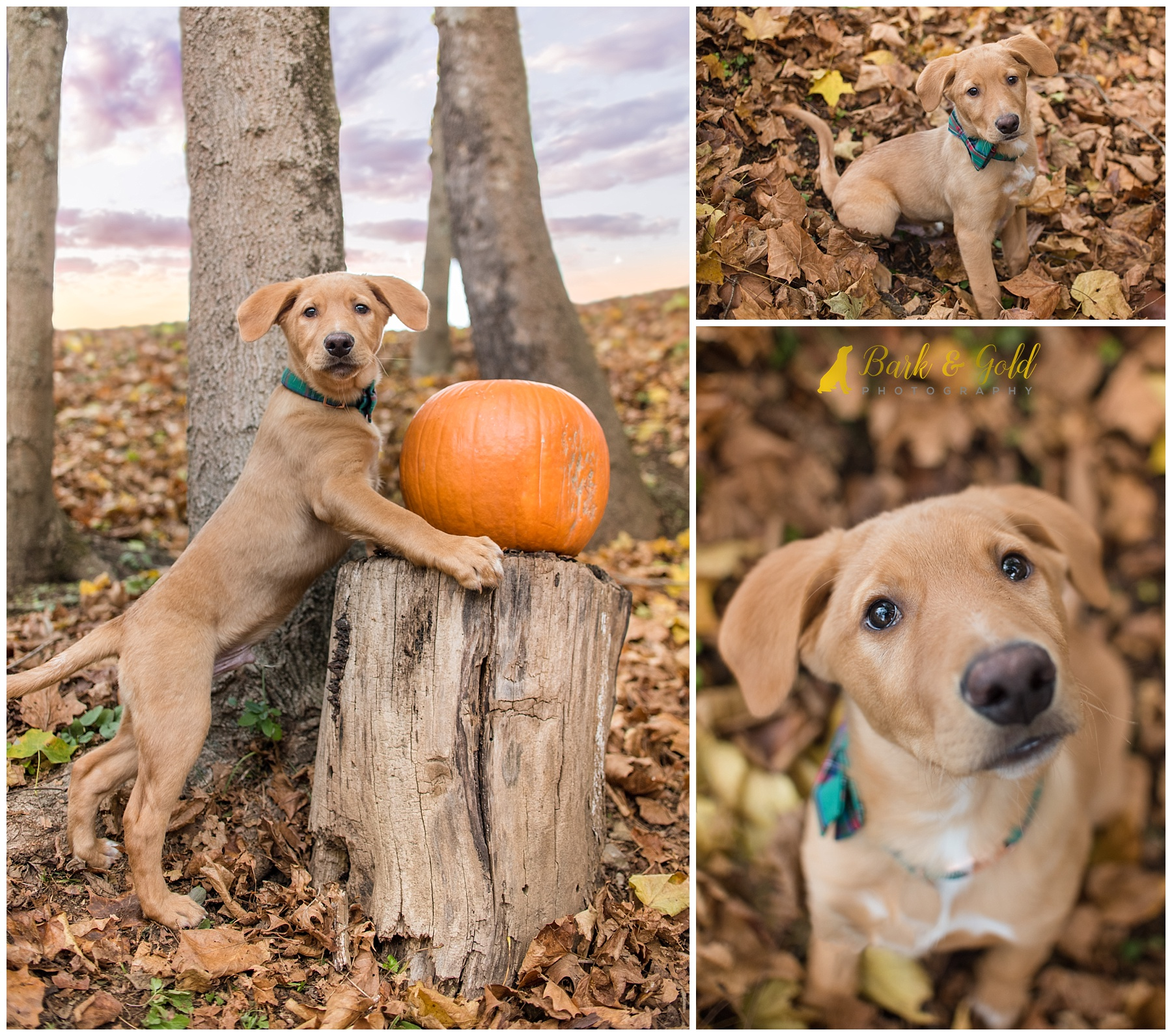 Brown puppy at Mingo Creek Park playing in fall leaves