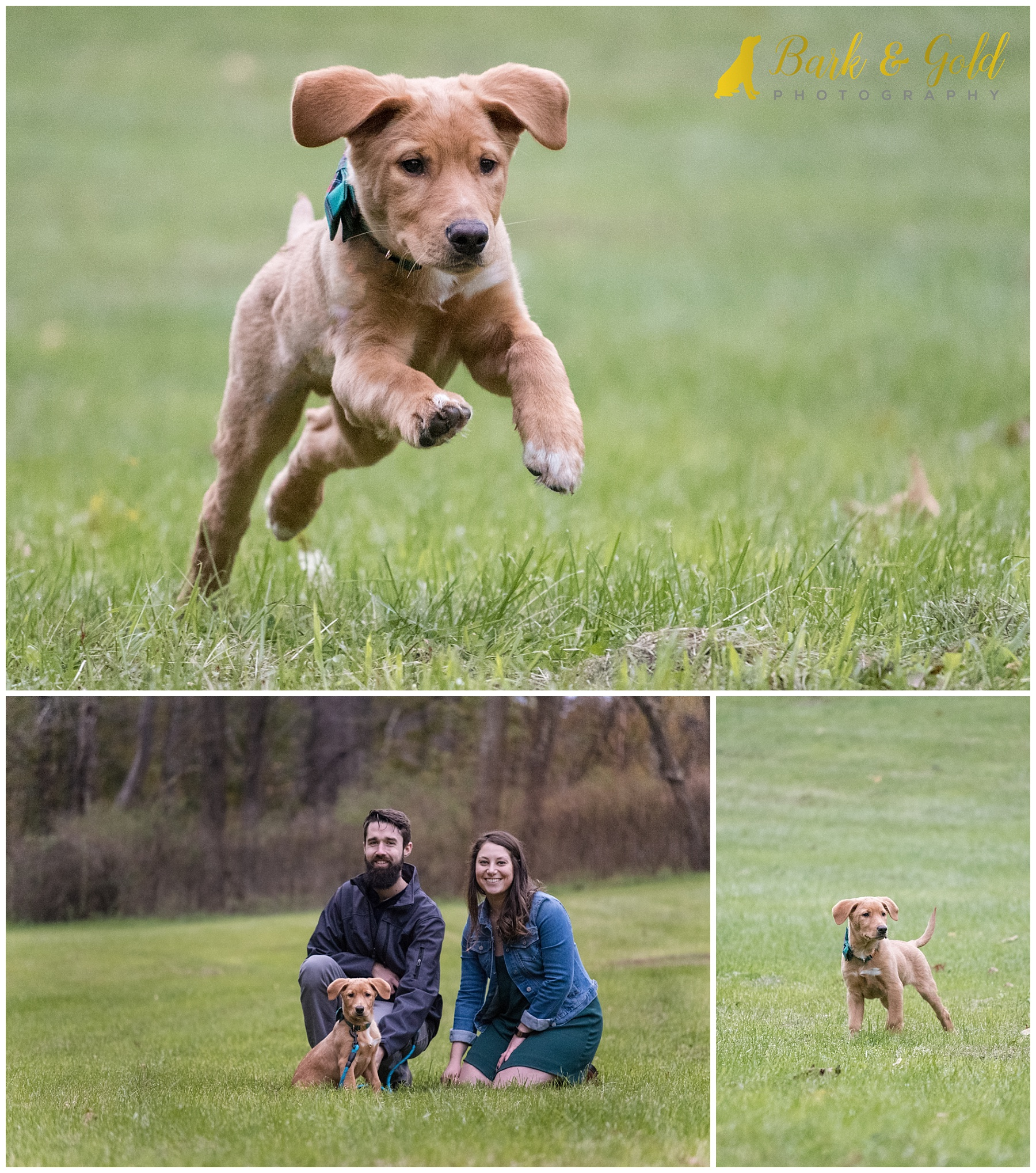 Brown puppy at Mingo Creek Park running through a field