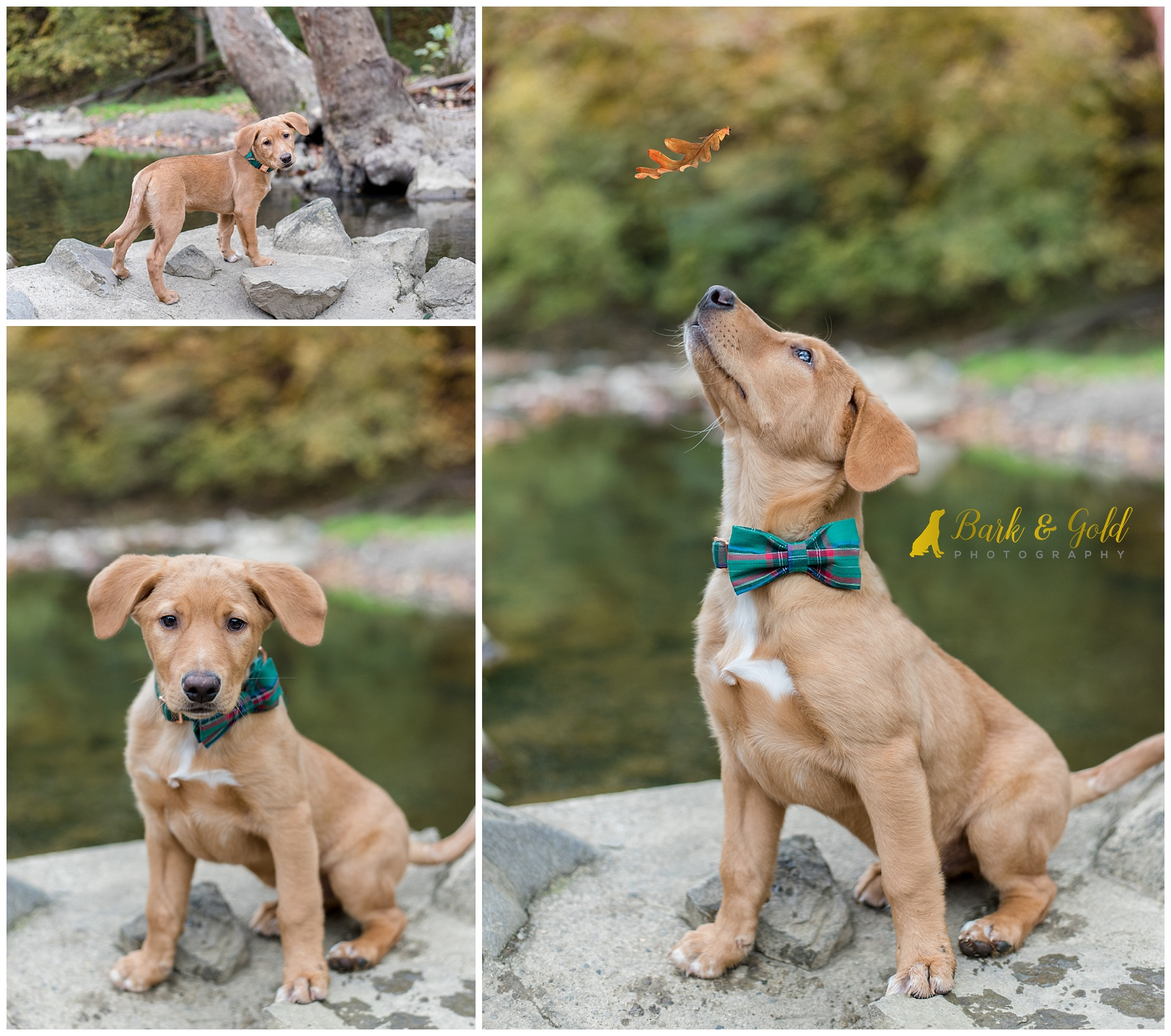 Brown puppy at Mingo Creek Park posing by water
