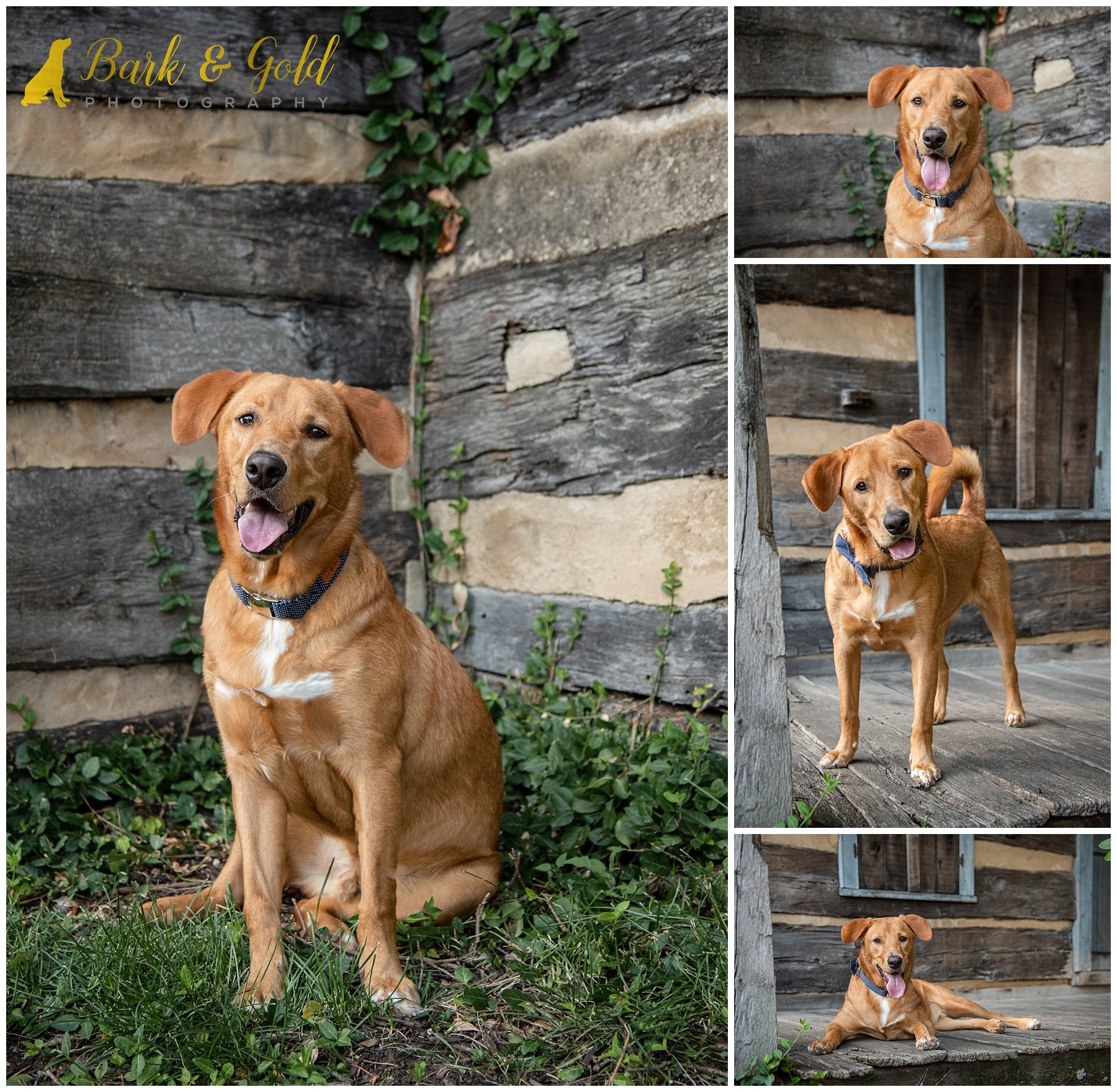 Brown mixed breed dog at Schenley Plaza's log cabin