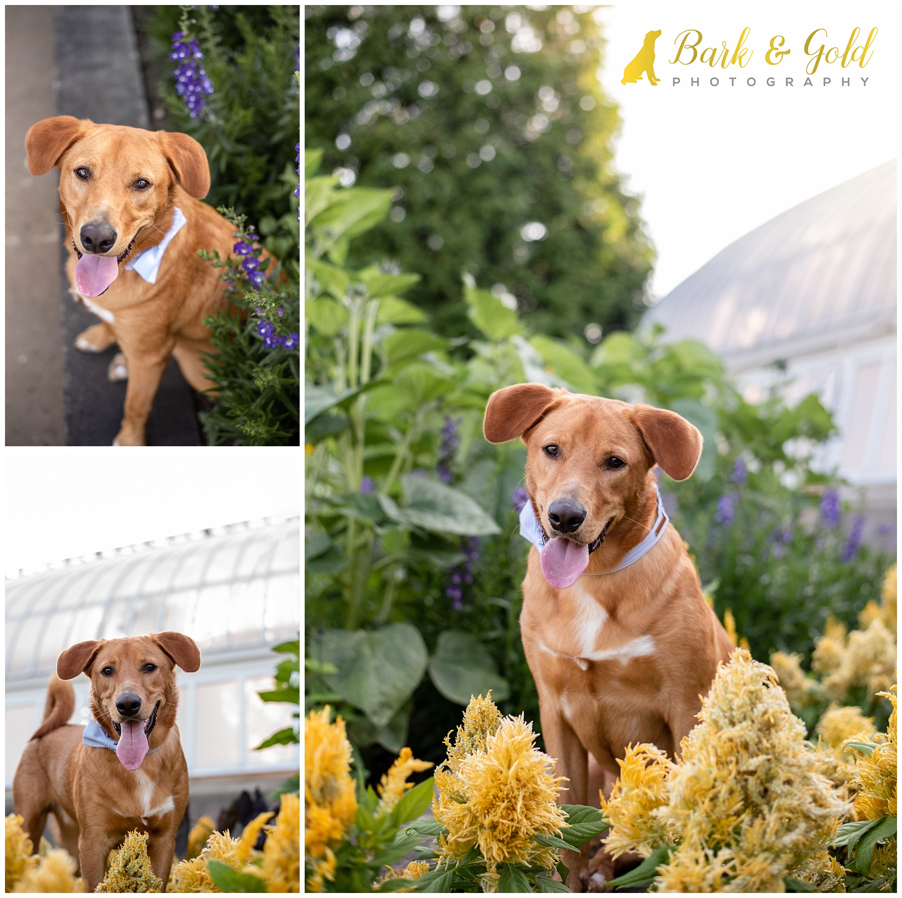 Brown mixed breed dog among flowers at Phipps Conservatory