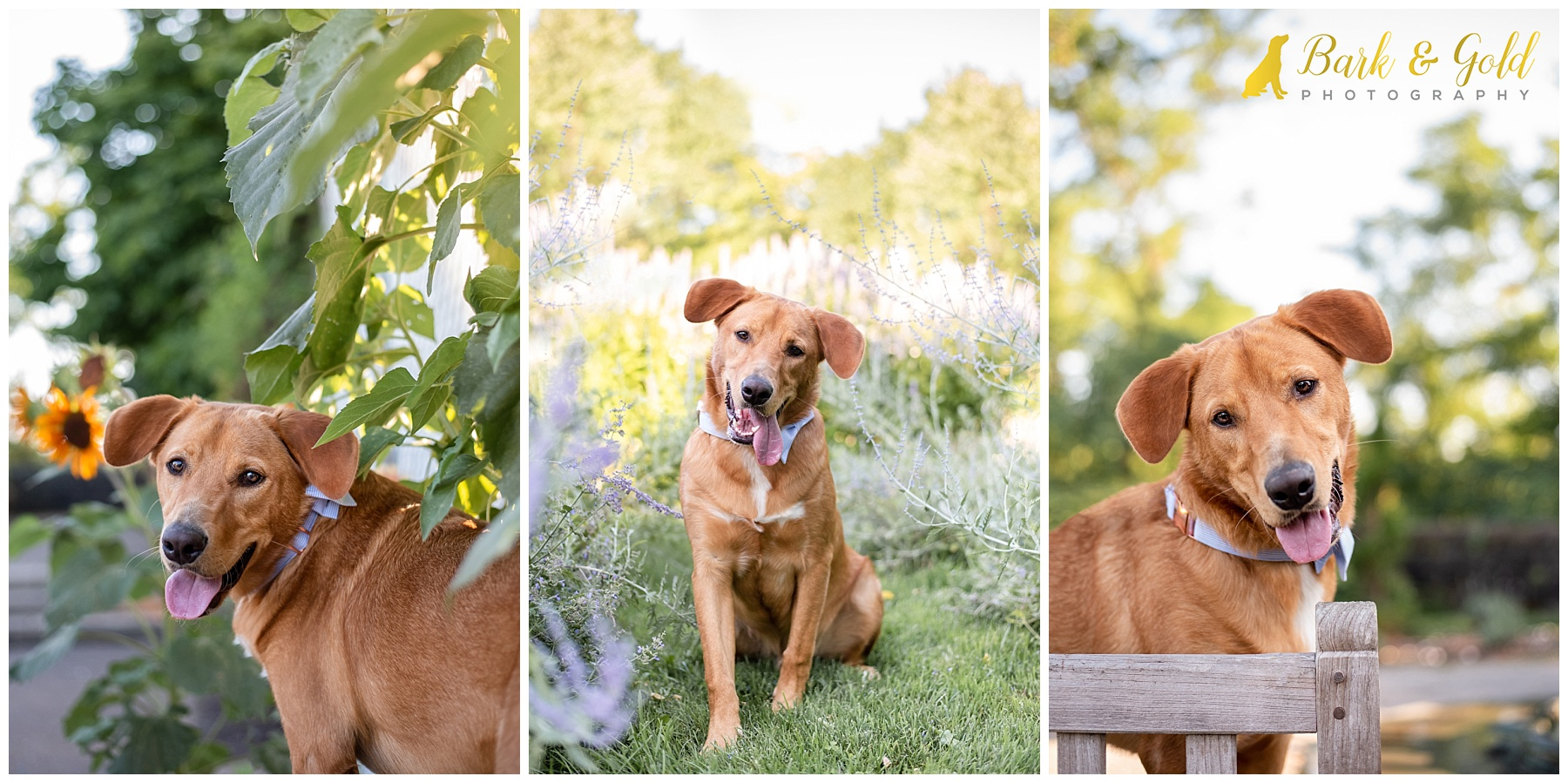 Brown mixed breed dog at playing in flowers at Phipps Conservatory gardens