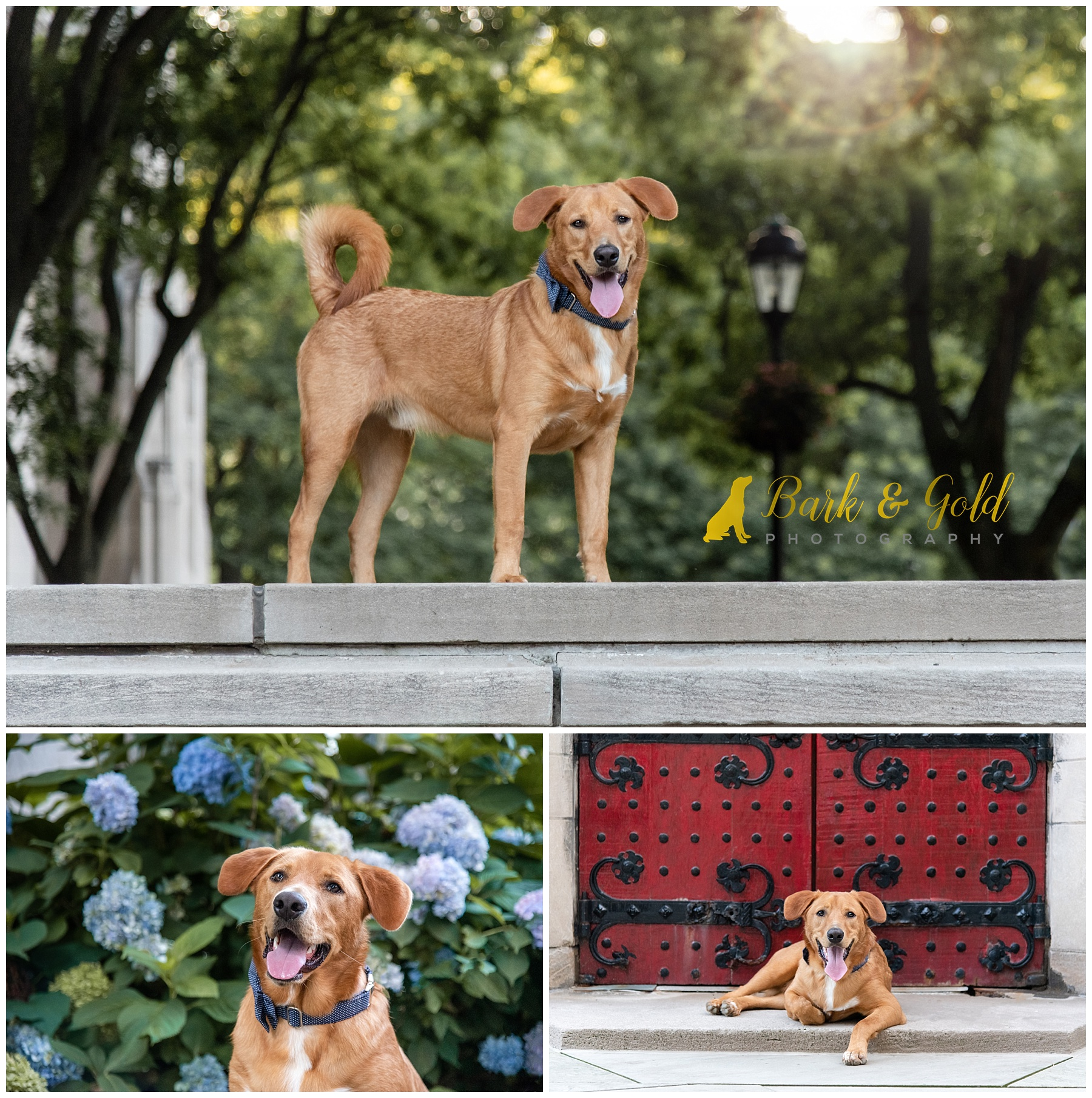 Brown mixed breed dog at Schenley Plaza by iconic red door