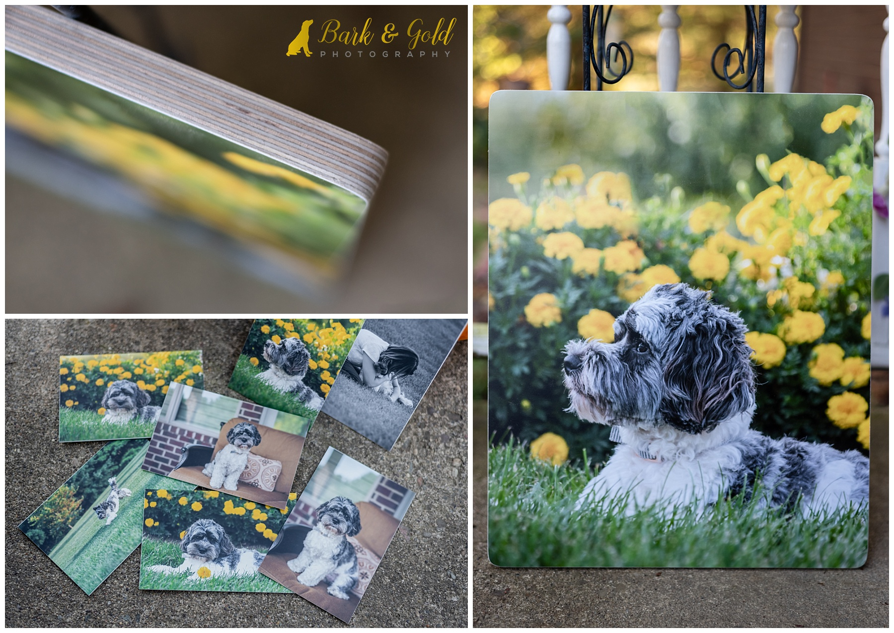 artisan wood and small gift prints of a Cavapoo puppy