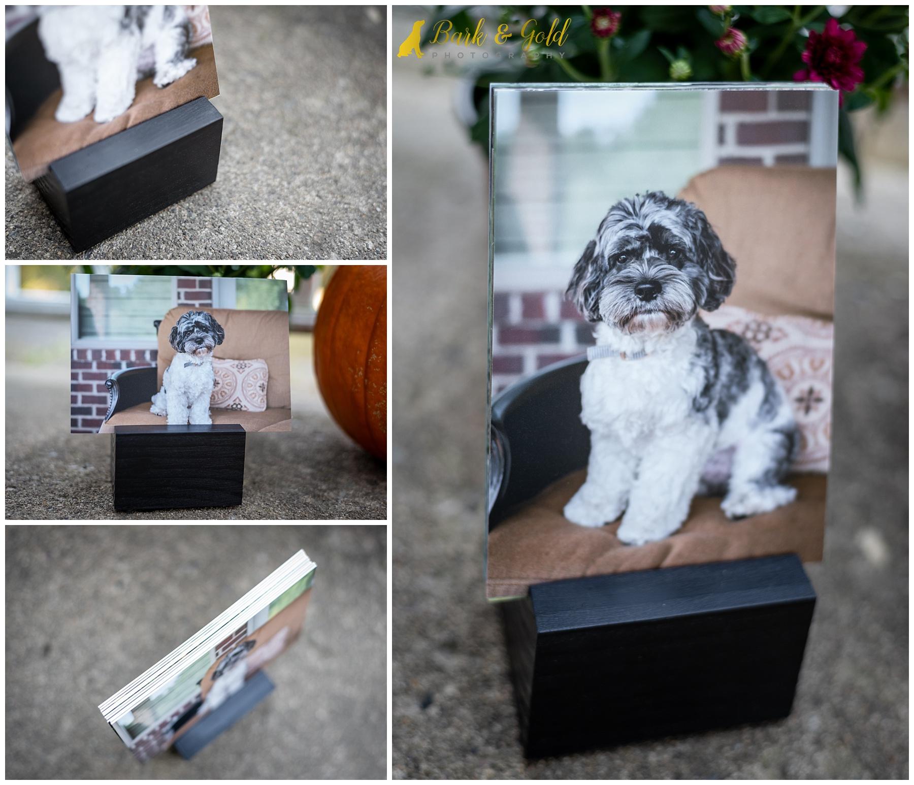 album block featuring Cavapoo puppy
