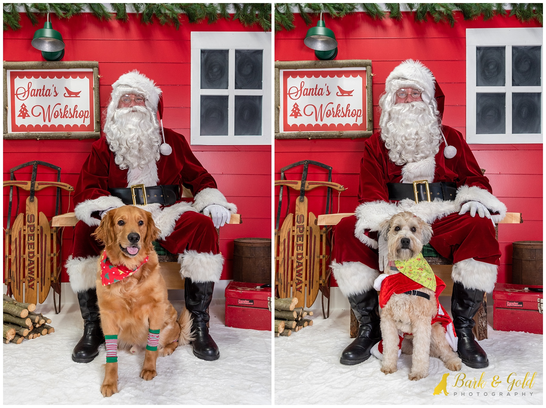 dogs in Christmas clothes at Petagogy Greensburg's pet photos with Santa