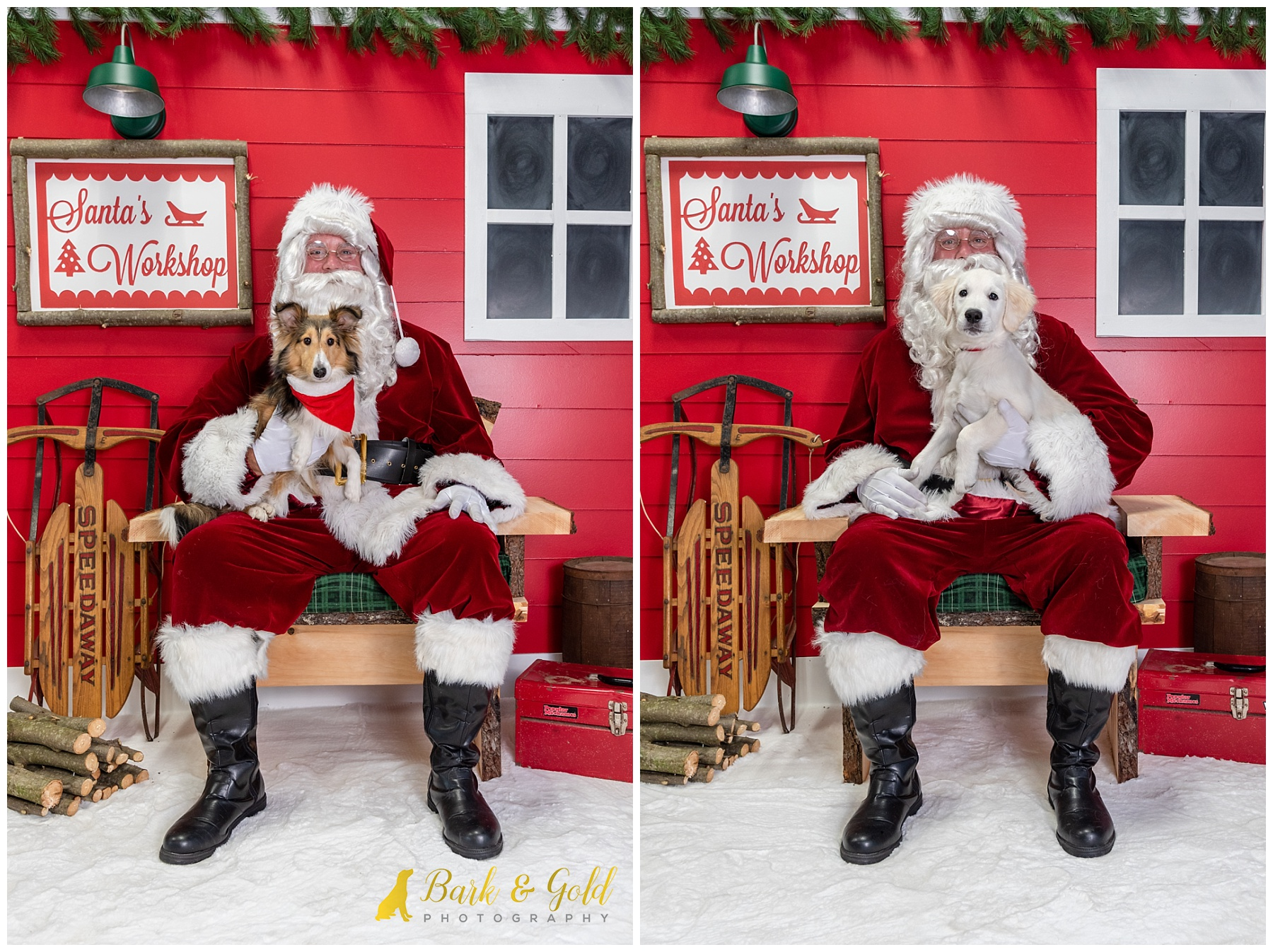puppies' first Christmas photos at Petagogy Greensburg's pet photos with Santa