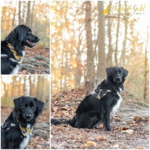 Gussie's Lakeside Fall Session - Pittsburgh Dog Photography