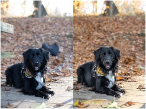 3 Tips for Photographing Black and Dark-colored Dogs