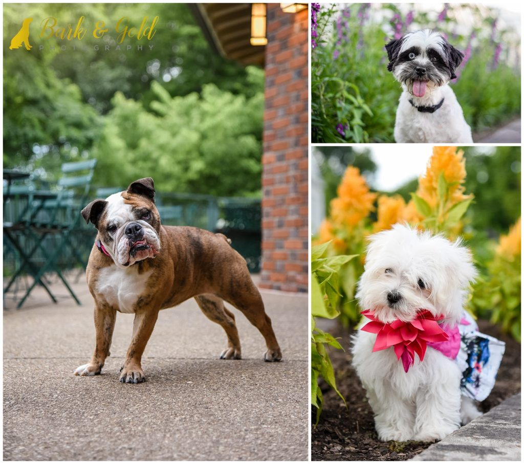 dogs with cute expressions at Phipps Conservatory near Pittsburgh