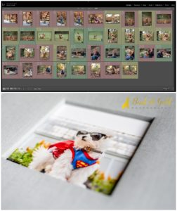 Your Pet Photography Experience - Part 3: The Reveal and Ordering Appointment