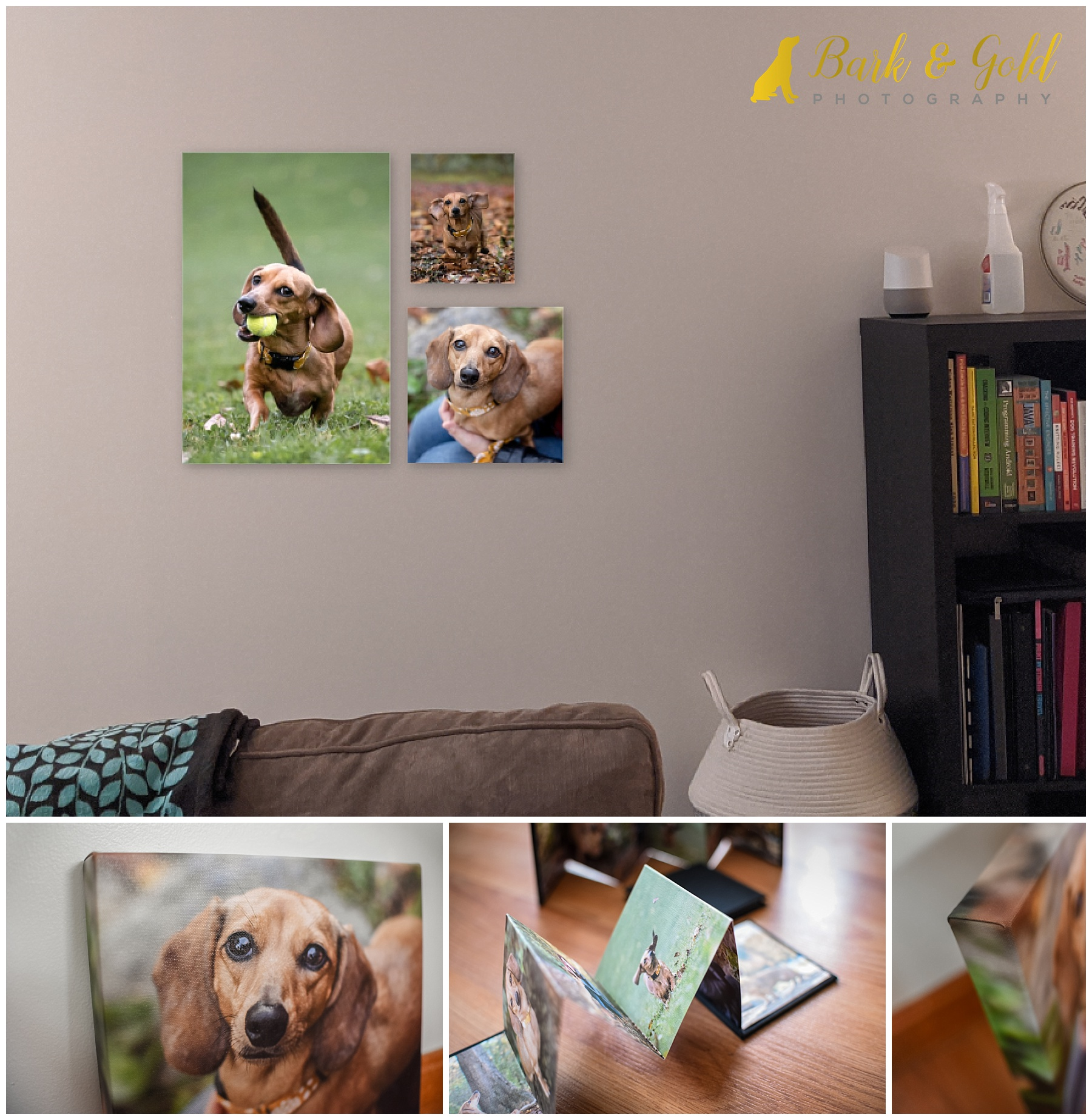 gallery-wrapped canvases and mini accordion album of a miniature dachshund puppy