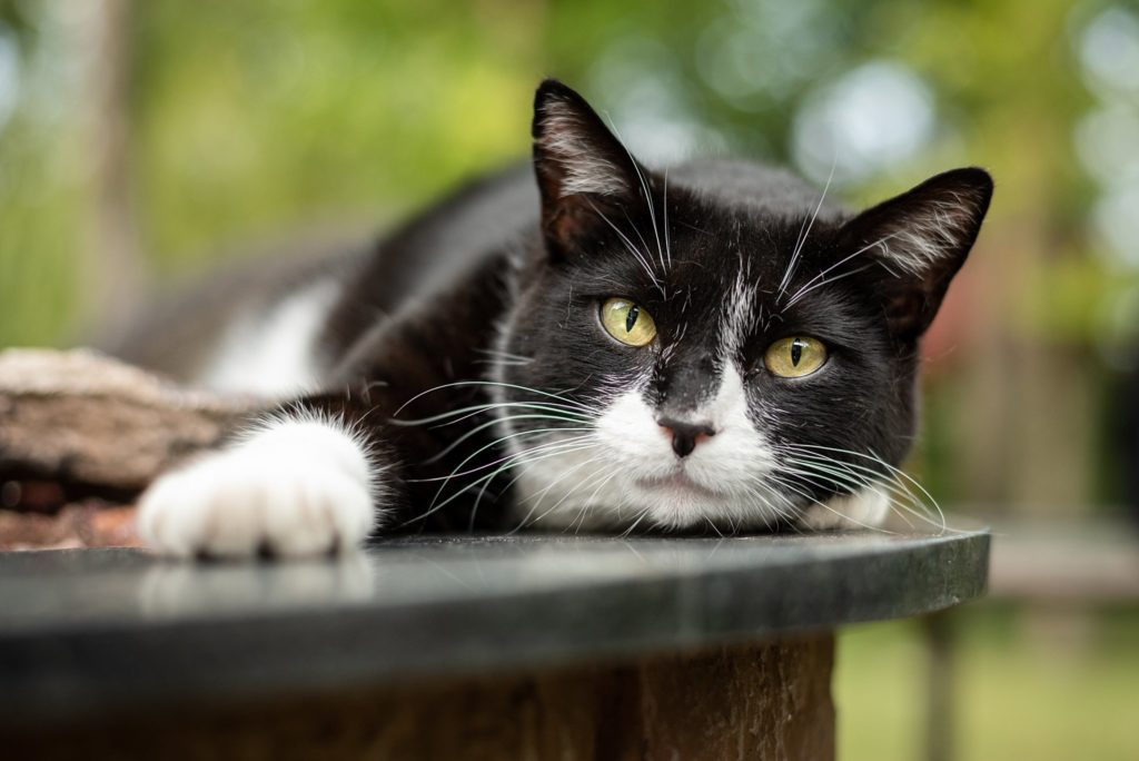 black and white cat lounging outdoors