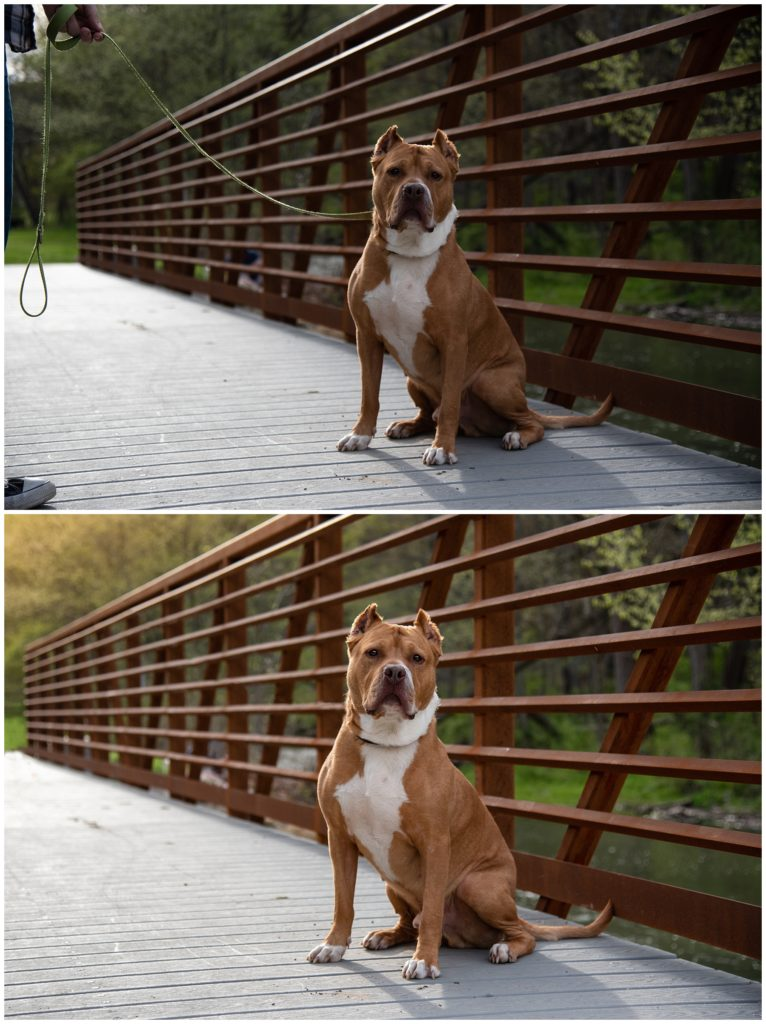 before and after of leash removal