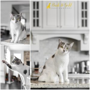 Autumn & Leo the Kittens - Pittsburgh Cat Photography