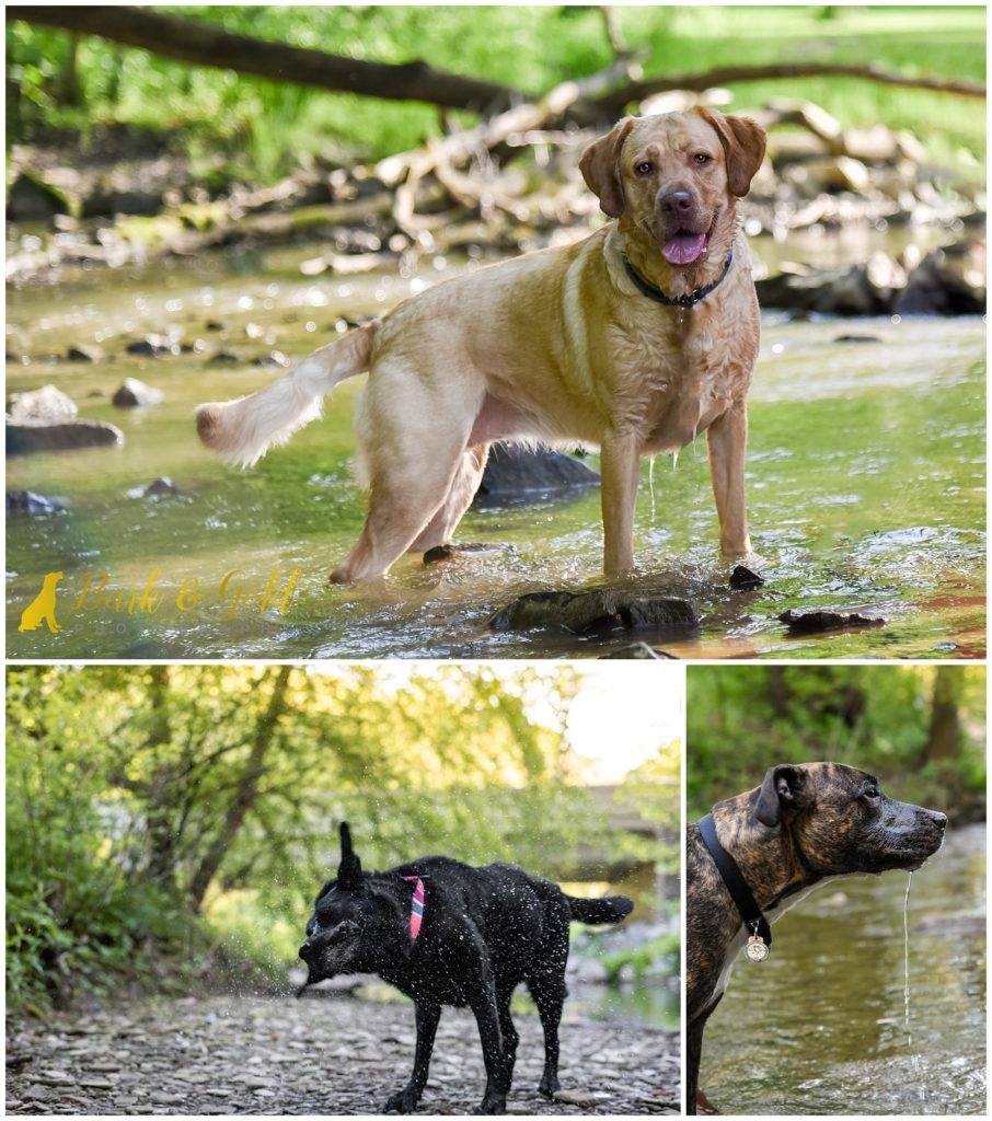 swimming dogs beating the heat in creeks