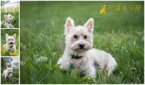 5 Tips for Photographing Your Senior Dog