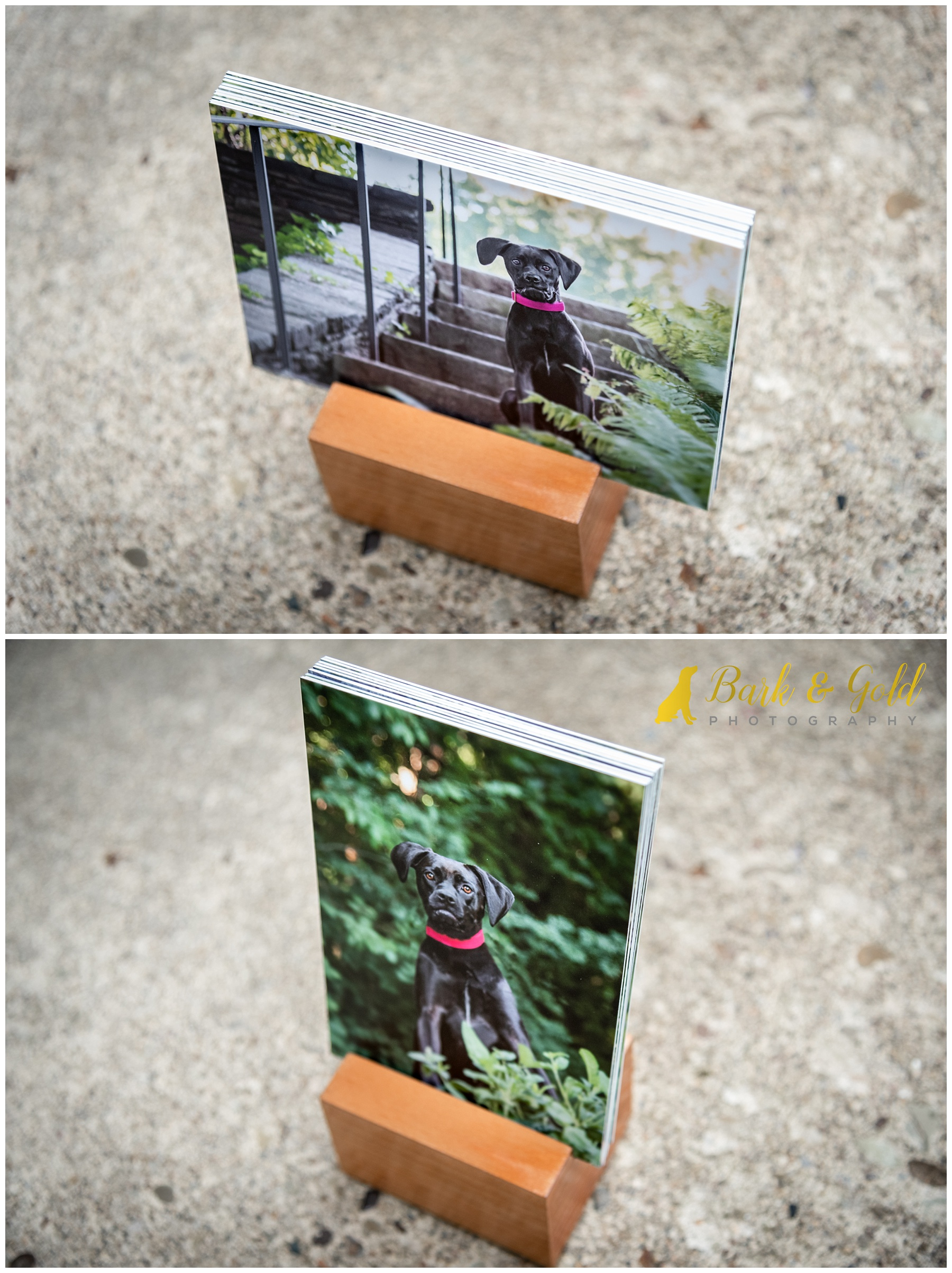 album block with photos of black dog in natural wood block