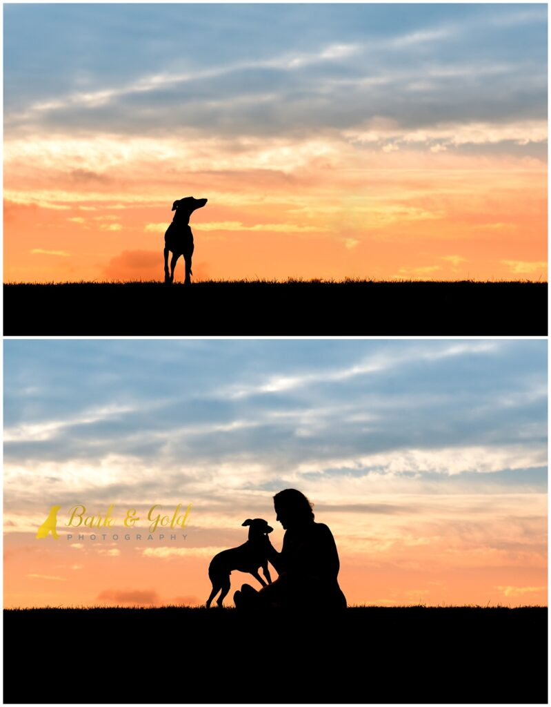 Italian Greyhound connecting with owner during a Silhouette Sunset Session near Pittsburgh