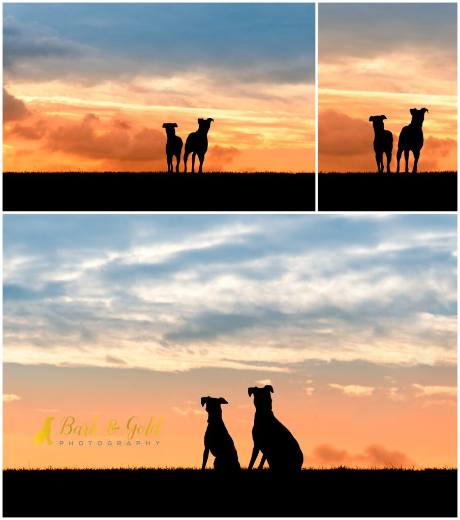 Italian Greyhounds against a sunset sky during a Silhouette Sunset Session near Pittsburgh