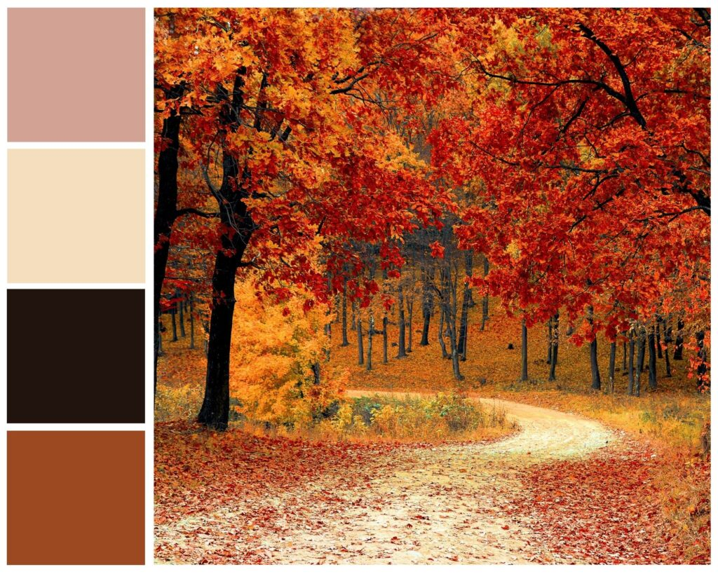 autumn woods-inspired color mood board with pink and fall hues