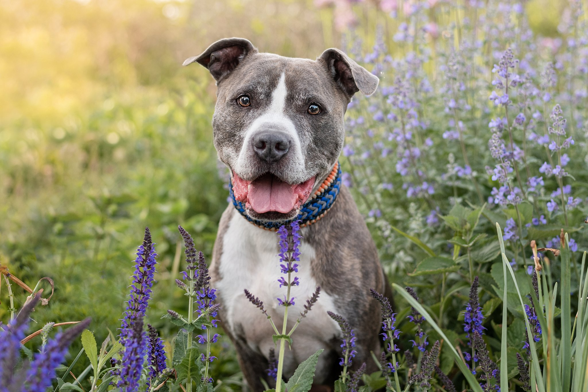 pit bull smiling in a garden at Phipps Conservatory near Pittsburgh
