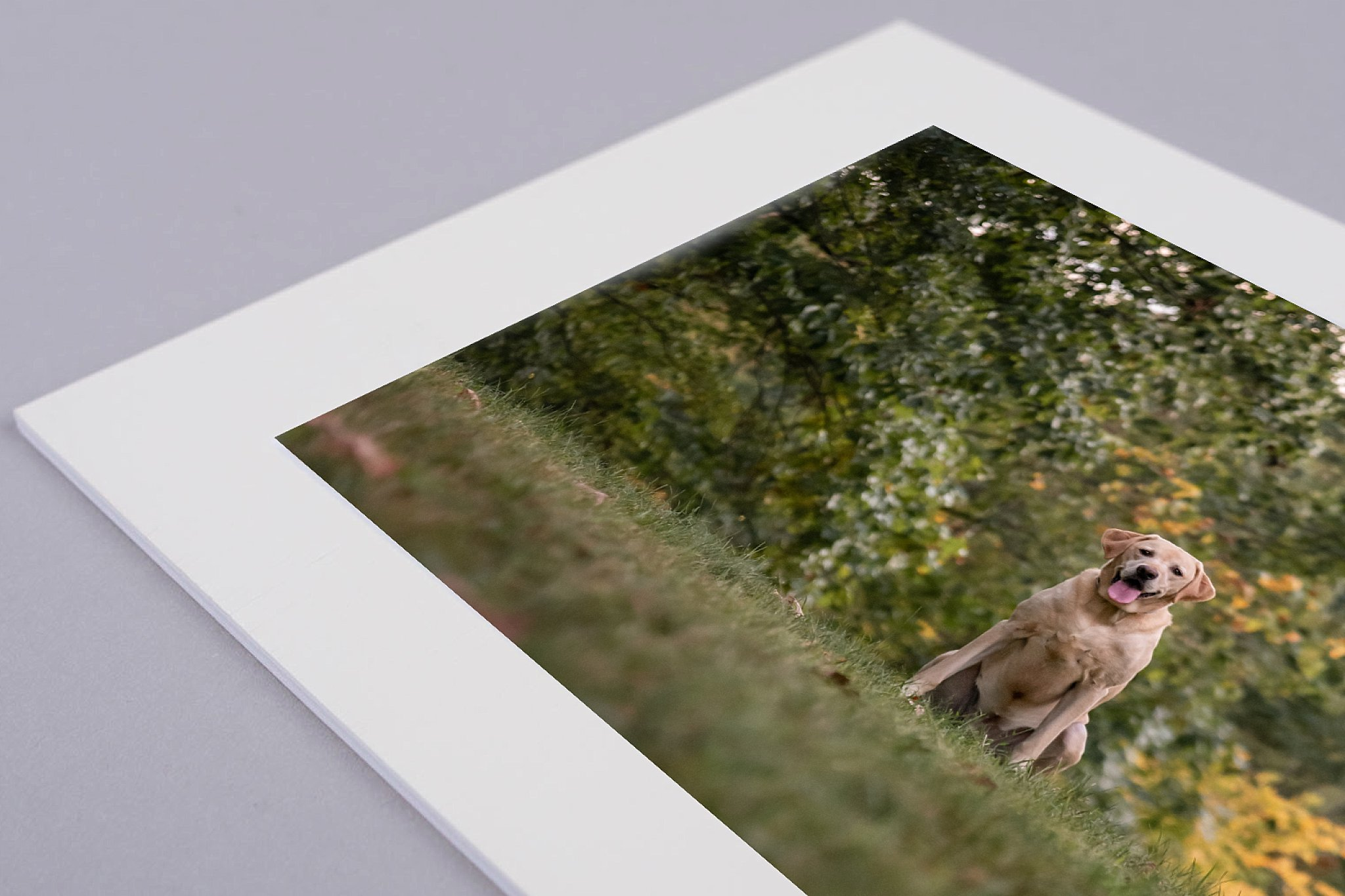 yellow Lab on a matted gift print