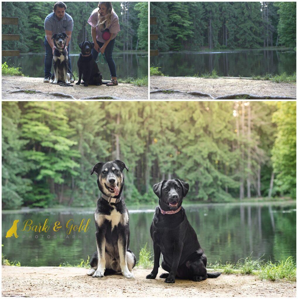 final dog portrait composite progression