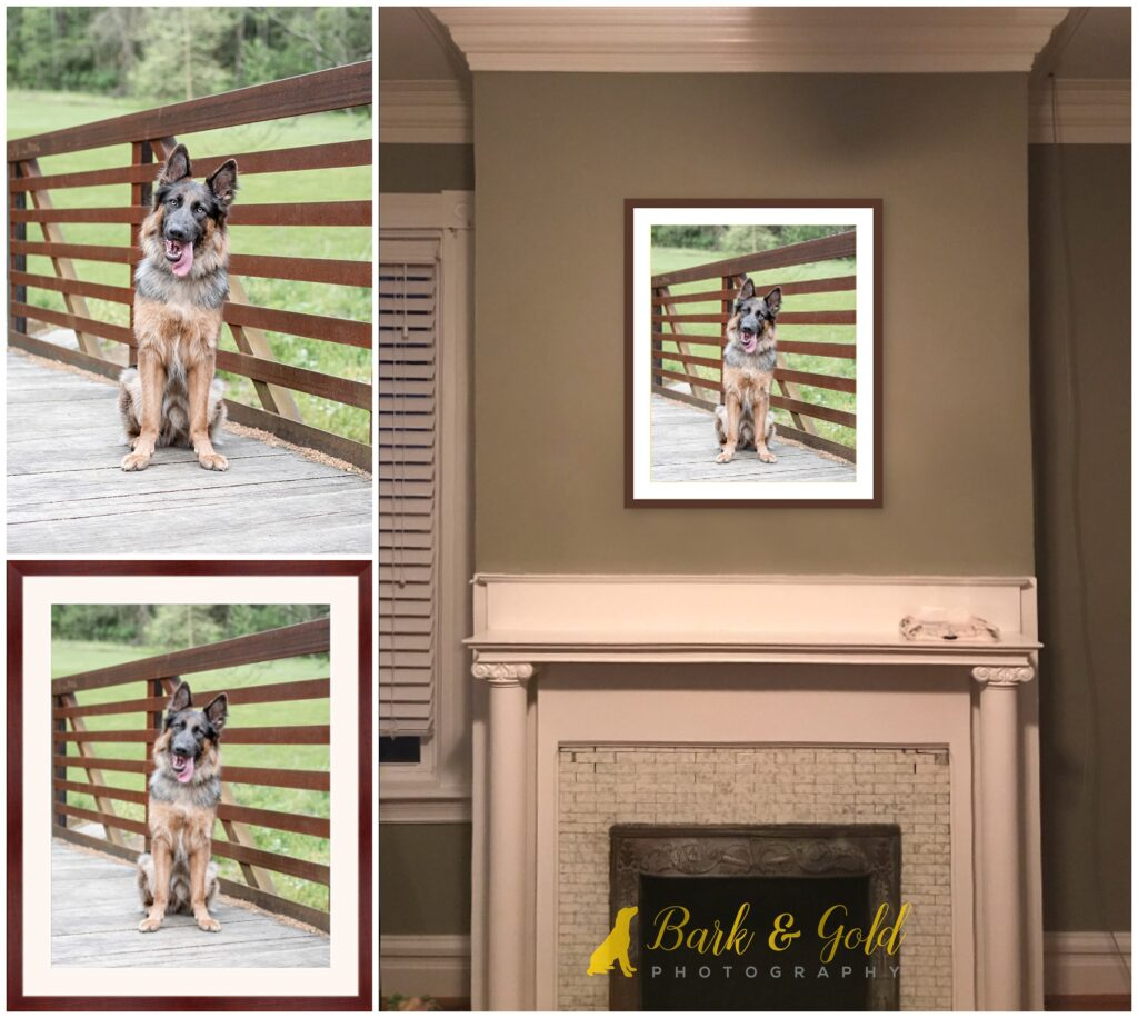 framed print of a German Shepherd on a bridge at Mingo Creek Park above a fireplace