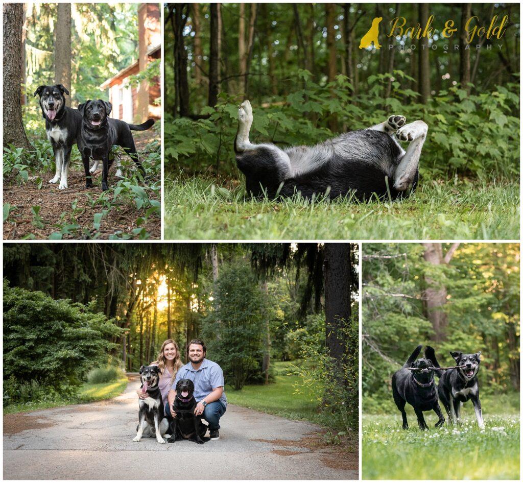 playful dogs at Sahli Nature Park in Beaver Falls