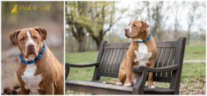 Recommended Types of Collars for Your Dog's Photography Session