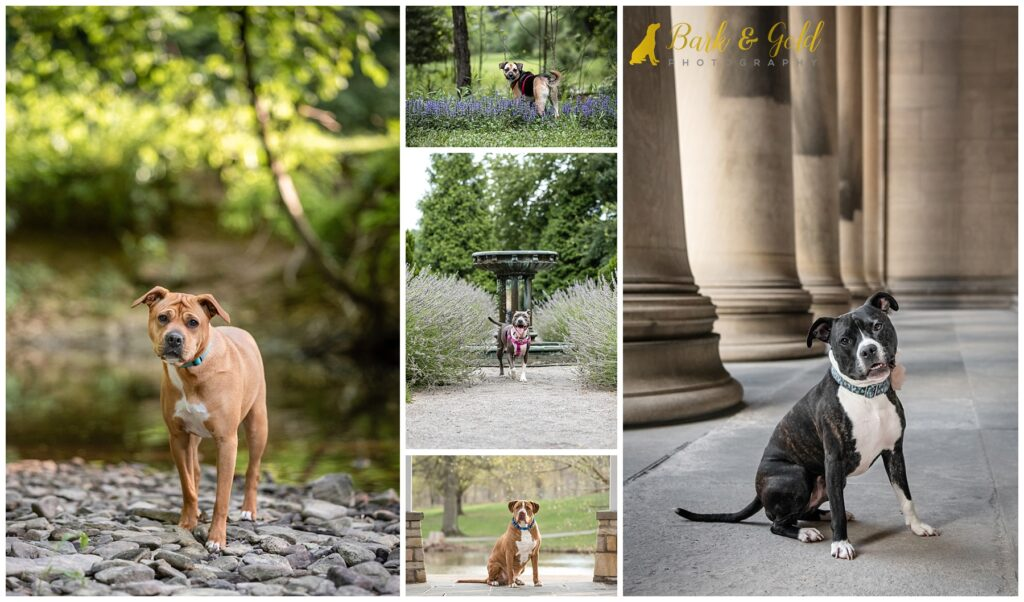 Biggies Bullies 2022 calendar dogs at various locations throughout the greater Pittsburgh area